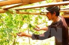 Quảng Ngãi: Vùng căn cứ địa cách mạng Mô Níc 'chuyển mình'