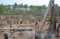 Gia Lai: Đề nghị chuyển hồ sơ vụ mất 1.200ha rừng sang công an xử lý