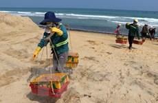 Ngư dân Quảng Ngãi phấn khởi vì trúng mùa ruốc biển