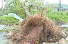 Sơn La: Mưa đá kèm theo gió lốc gây thiệt hại nặng ở Mộc Châu