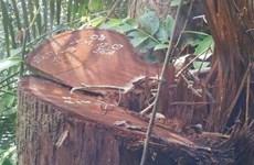 Bình Thuận: Khởi tố 4 cán bộ Ban quản lý rừng phòng hộ La Ngà