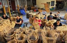 Những hình ảnh độc đáo về nghề đan bèo tây tại Ninh Bình