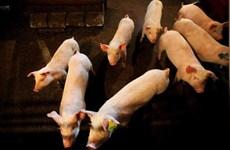 Trung Quốc quan ngại về hệ thống giám sát xuất khẩu thịt của Canada