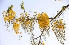 Hà Nội rực rỡ thay màu áo mới - mùa hoa tháng Năm
