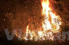 Hà Nội: Đang xảy ra cháy lớn khu rừng trồng ở huyện Sóc Sơn