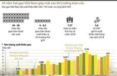 [Infographics] 30 năm hạt gạo Việt Nam góp mặt vào thị trường toàn cầu