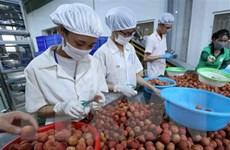 95 doanh nghiệp Việt-Nhật tham gia hội nghị giao thương trực tuyến
