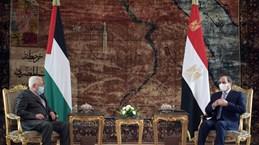 Lãnh đạo Ai Cập, Palestine thảo luận về tiến trình hòa bình Trung Đông