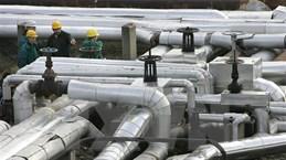 Công ty Hungary nối lại hoạt động nhập khẩu dầu thô từ Nga