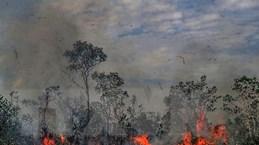 Cộng đồng thổ dân Brazil kêu gọi châu Âu giúp bảo vệ rừng Amazon