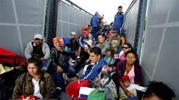 Mỹ cân nhắc trừng phạt Guatemala vì từ chối làm 'nước thứ 3 an toàn'