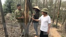 Hải Dương: Gần 1ha rừng trồng ở Chí Linh bị chết vì khô nóng