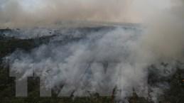 Tổ chức Allrise khởi kiện Tổng thống Brazil hủy hoại rừng Amazon