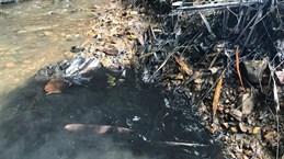 Nước sạch Hà Nội có mùi lạ: Chất styren gây hại tới sức khỏe thế nào?