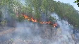 Quảng Nam: Người dân bất cẩn dùng lửa, hơn 100ha rừng keo cháy trụi