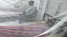 Honduras hứng chịu dịch sốt xuất huyết tồi tệ nhất trong 50 năm qua