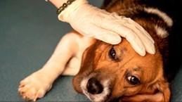 Na Uy 'đau đầu' vì dịch bệnh bí ẩn khiến hàng chục chú chó bị chết