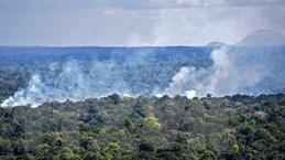 Các thị trưởng thế giới kêu gọi bảo vệ rừng, xanh hóa thành phố
