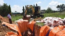 Bình Dương khẩn trương ngăn chặn dịch tả lợn châu Phi lây lan