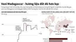 [Infographics] Vani Madagascar - hương liệu đắt đỏ hơn bạc