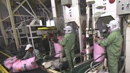 Senegal mở lại không phận tạo cơ hội giao thương tích cực với Việt Nam
