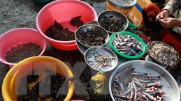 [Photo] Những sản vật mùa nước nổi phong phú ở Hậu Giang