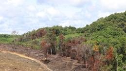 Bình Thuận: Thu hồi 41ha đất công cho thuê sai quy định