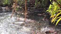 Hà Tĩnh: Người dân chặn kênh nghi trang trại lợn xả thải gây ô nhiễm