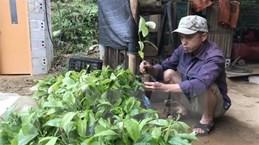 Lạng Sơn kết luận thanh tra sai phạm trong cấp cây giống cho hộ nghèo