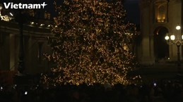 Quảng trường Saint Peter thắp sáng cây thông đón mùa Giáng sinh