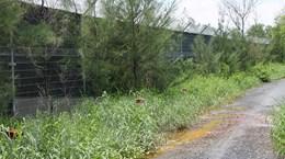 TP.HCM: Thu hồi đất để trồng cây xanh cách ly bãi rác Đa Phước