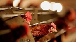 Trung Quốc ghi nhận thêm một người nhiễm virus cúm gia cầm H7N9