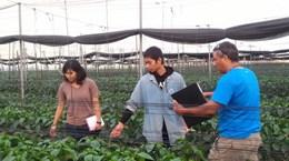 [Mega Story] Nông nghiệp công nghệ cao: Học hỏi kinh nghiệm từ Israel