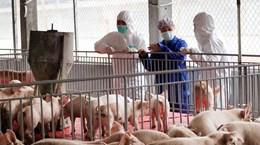 Từ 30/6, Việt Nam sẽ tạm ngừng nhập khẩu lợn sống của Thái Lan
