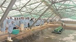 Bạc Liêu phát triển nông nghiệp theo hướng ứng dụng công nghệ cao