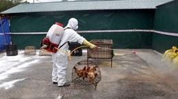 Phòng, chống cúm gia cầm A/H5N8 lần đầu tiên xuất hiện tại Việt Nam