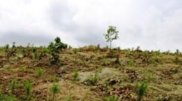 Đắk Nông: Thu hồi gần 70.000m2 đất trồng rừng bị lấn chiếm trái phép
