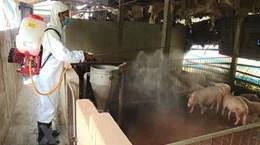 Bắc Giang: Xử phạt hộ kinh doanh thịt nhiễm virus tả lợn châu Phi