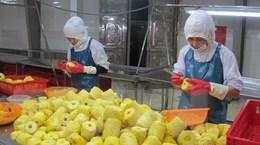 Việt Nam-Hà Lan đẩy mạnh hợp tác trong lĩnh vực nông nghiệp