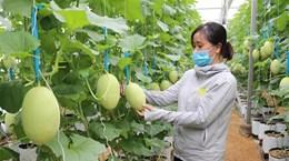 Nhiều cơ hội phát triển nông nghiệp công nghệ cao Việt Nam-Australia