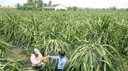 Ứng dụng công nghệ cao trong thâm canh thanh long Chợ Gạo