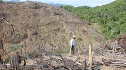 Bình Định khởi tố vụ án hủy hoại gần 20ha rừng tại huyện Hoài Ân