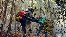 Hà Tĩnh: Cháy rừng bùng phát trở lại trong đêm tại khu vực núi Nầm