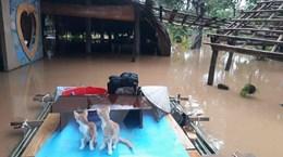 Đồng Nai tiếp tục di dời 1.200 hộ dân ven sông do lũ lên cao