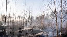 Ukraine: Cháy rừng khiến không khí ở Kiev ô nhiễm nhất thế giới