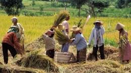 RCEP: Indonesia sẽ bỏ một số mặt hàng khỏi cam kết dỡ bỏ thuế quan