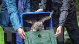 Ngăn chặn buôn bán động vật hoang dã góp phần ngăn ngừa đại dịch