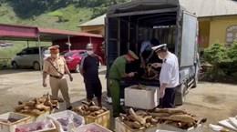 Sơn La: Bắt giữ hơn 1 tấn sản phẩm động vật bốc mùi hôi thối