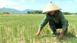 Bình Thuận: Không để thiếu nước cho sản xuất vụ Hè Thu