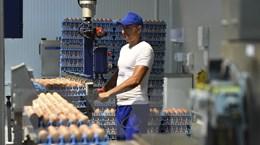 """EU hợp tác chặt chẽ hơn về an toàn thực phẩm sau bê bối trứng """"bẩn"""""""